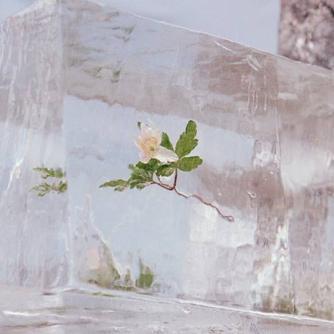 Windflowers Free download